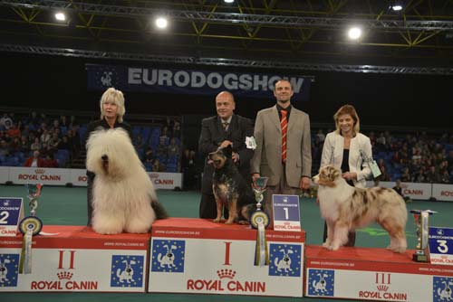 FCI group I - Winners of the Eurodogshow Kortrijk (Belgium), 14 - 15 November 2015 (CACIB BIS)