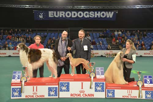 FCI group X - Winners of the Eurodogshow Kortrijk (Belgium), 14 - 15 November 2015 (CACIB BIS)