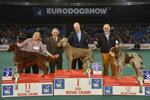 FCI group VII - Winners of the Eurodogshow Kortrijk (Belgium), 14 - 15 November 2015 (CACIB BIS)