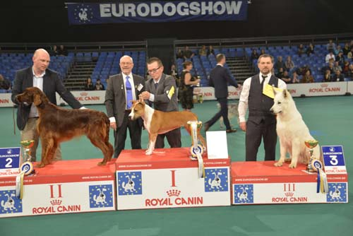 Best Junior (Sunday, 15 November 2015) - Winners of the Eurodogshow Kortrijk (Belgium), 14 - 15 November 2015 (CACIB BIS)