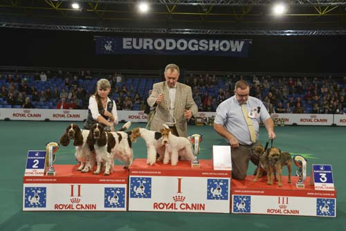 Best Brace (Sunday, 15 November 2015) - Winners of the Eurodogshow Kortrijk (Belgium), 14 - 15 November 2015 (CACIB BIS)