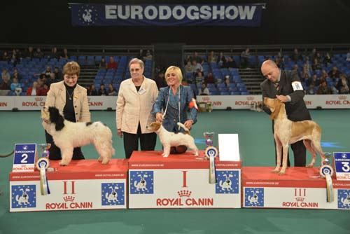 Best Puppy (Sunday, 15 November 2015) - Winners of the Eurodogshow Kortrijk (Belgium), 14 - 15 November 2015 (CACIB BIS)