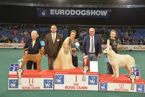 Best Veteran (Sunday, 15 November 2015) - Winners of the Eurodogshow Kortrijk (Belgium), 14 - 15 November 2015 (CACIB BIS)